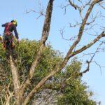 Élagage, abattage, soins aux arbres, démontage en rétention
